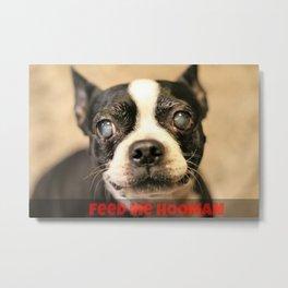 Hungry Doggo Metal Print