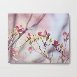 Pink Dogwood Flower Photography, Pastel Lavender Floral, Spring Nature Art Metal Print