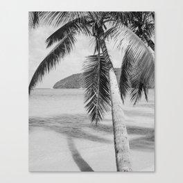 Maho Palm Canvas Print