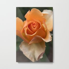 Flower Art Rose Closeup Photography Metal Print