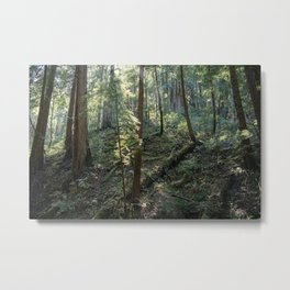 Muir Woods National Monument Metal Print