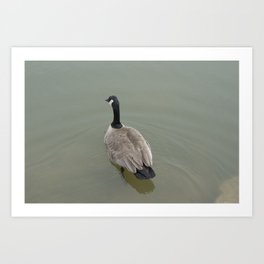 Swimming Away Art Print