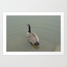 Swimming Away Art Print