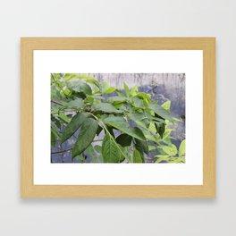 Leaves at Black Bayou, Monroe, Louisiana Framed Art Print