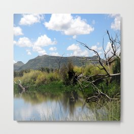 Pond Beauty Metal Print