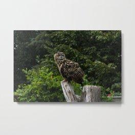 Eurasian Eagle Owl Metal Print