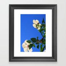 Summer Hibiscus Framed Art Print