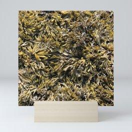 Algae by the Canadian waters Mini Art Print