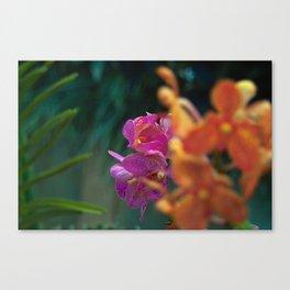 Orchid - Vanda Tricolor Canvas Print