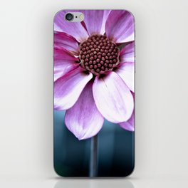 Dahlia sun iPhone Skin