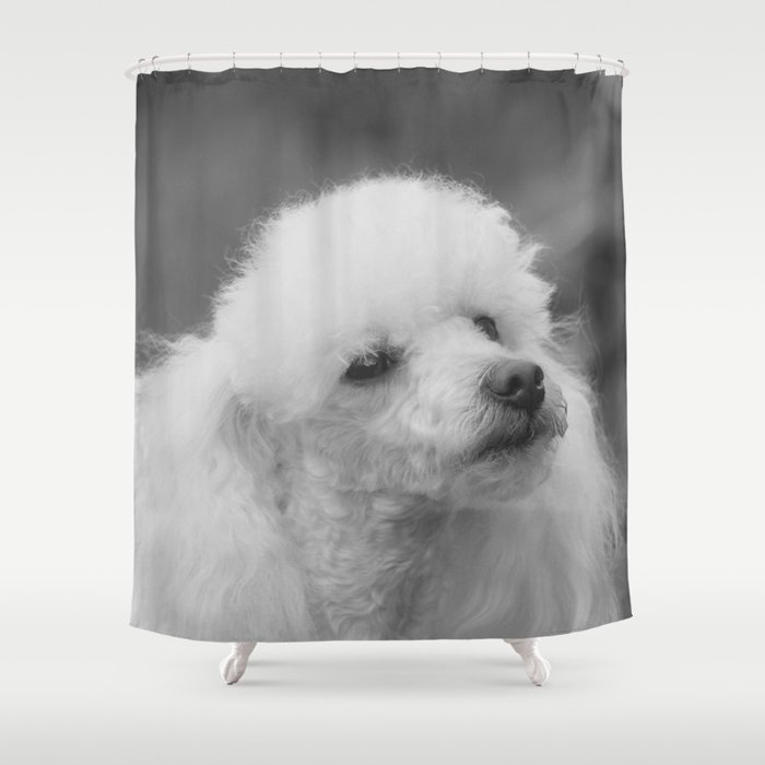 Toy Poodle Shower Curtain By Ritmoboxerdesigns