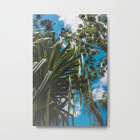 Tropical Canopy Metal Print