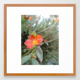 Geranium Framed Art Print