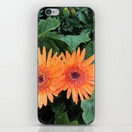 A Pair of Orange Gerber Daisies iPhone Skin