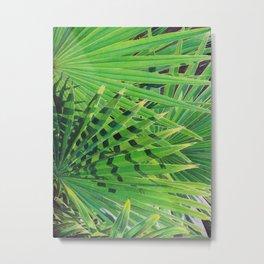 Fan Palm Metal Print