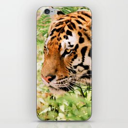 golden eyed tiger iPhone Skin