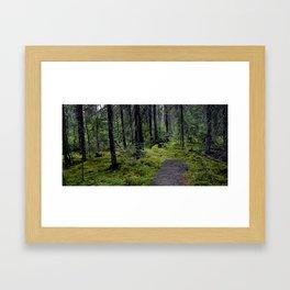 Tranquil Forest.  Framed Art Print