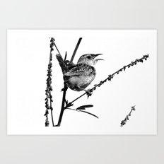 Sedge Wren Art Print
