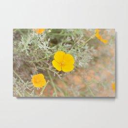 CA Poppies v. 2 Metal Print