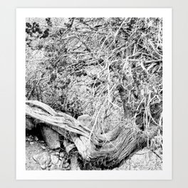 sketchy tree Art Print