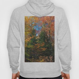 Autumn Forest Photograph Hoody