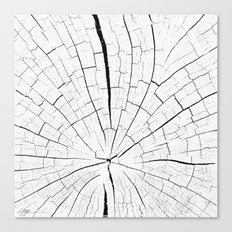 Woody white Canvas Print
