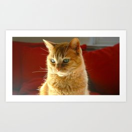 The Most Beautiful Cat in the World Art Print