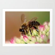 Bee on Flowers. Art Print