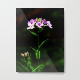 Springtime Phlox Metal Print
