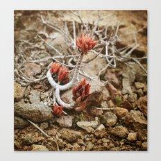 Fleur du désert Canvas Print