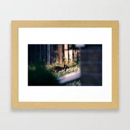 Rabbit At Dusk Framed Art Print