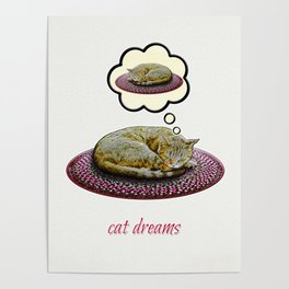 Cat Dreams Poster