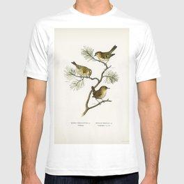 Eurasian wren (Nannus troglodytes) - Goldcrest (Regulus regulus) illustrated by the von Wright broth T-shirt