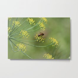 bees and fennel Metal Print