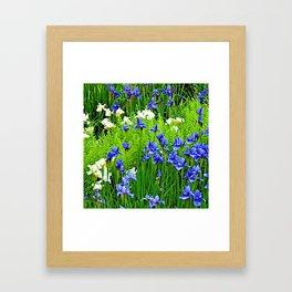 BLUE & WHITE  IRIS FLOWER GARDEN Framed Art Print