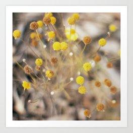 Abstract Botanical - Billy Buttons Art Print
