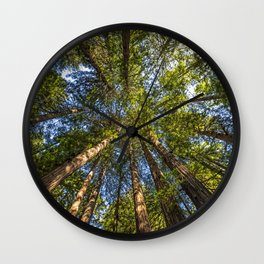 Coastal Redwoods aka Coast Redwood and California Redwood (Sequoia sempervirens) Wall Clock