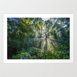 Sun Rays in a Forest Art Print