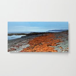 Seaweed Beach Metal Print