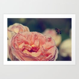 and so the bee comes Art Print