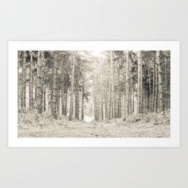 Quiet Forest I Art Print