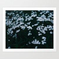 Blue hour, white flowers Art Print