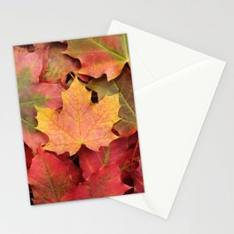 Yellow, green and red maple leaves Stationery Cards