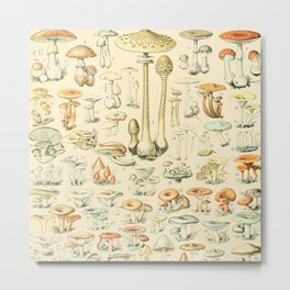 Mushrooms // Champignons III by Adolphe Millot XL 19th Century Science Textbook Diagram Artwork Metal Print