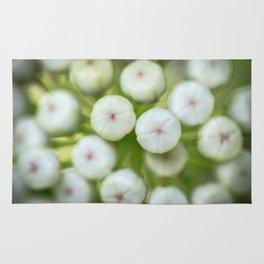Wht-flowered Milkweed Rug