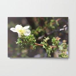Peaceful Flower Metal Print