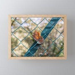 Oak leaf trapped Framed Mini Art Print