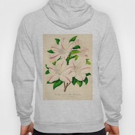 Azalea Alba Magnifica (Rhododendron indica) Vintage Botanical Floral Scientific Illustration Hoody