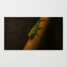 Giant Day Gecko Canvas Print