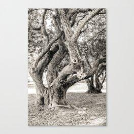 Arboreal Animal Canvas Print